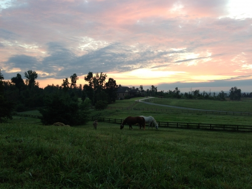 horses grazing at dawn